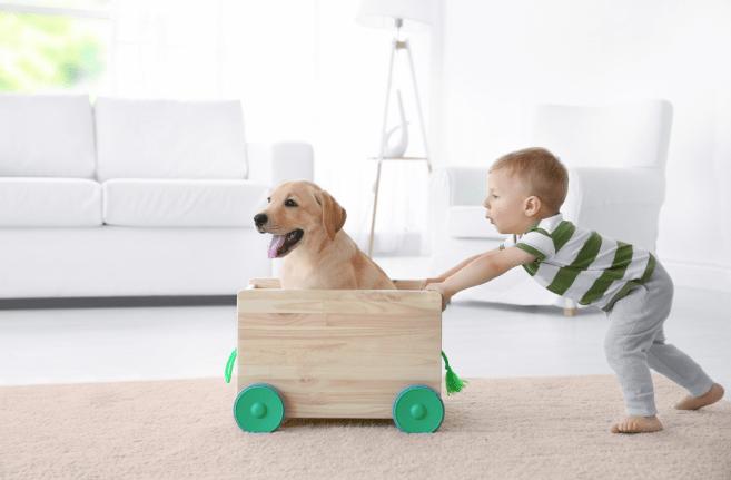 ismerd meg a kutya és a baba
